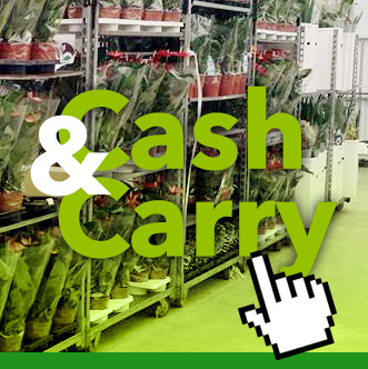 Cash and Carry - Azienda Saracino